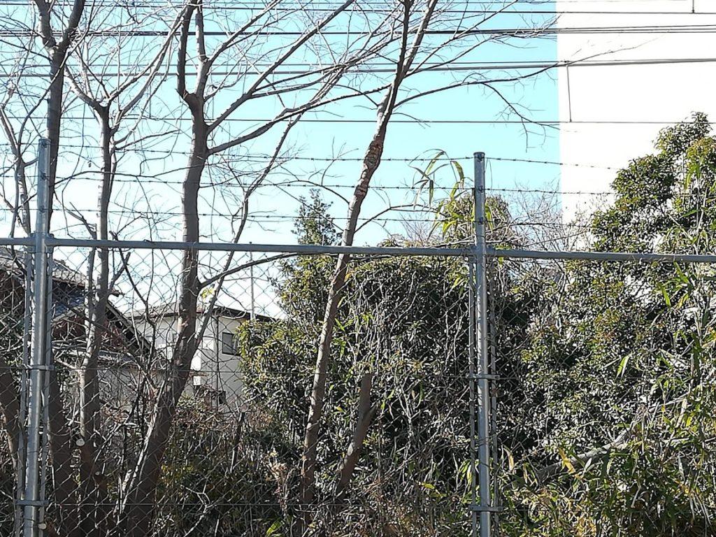 鵯塚砦跡4