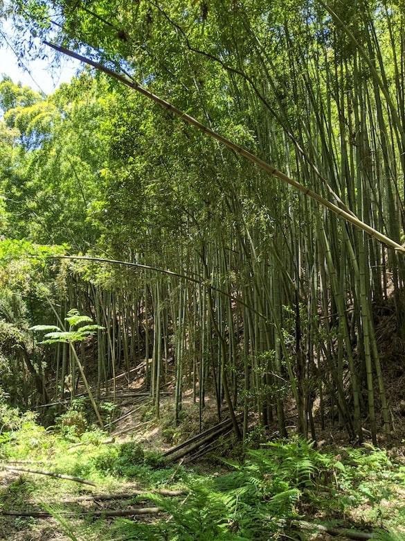 豊富な竹が手に入る。たけのこも生えます。