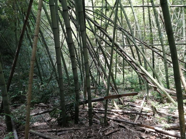 平坦地。数十年放置されていたので竹が生えすぎて倒れています。
