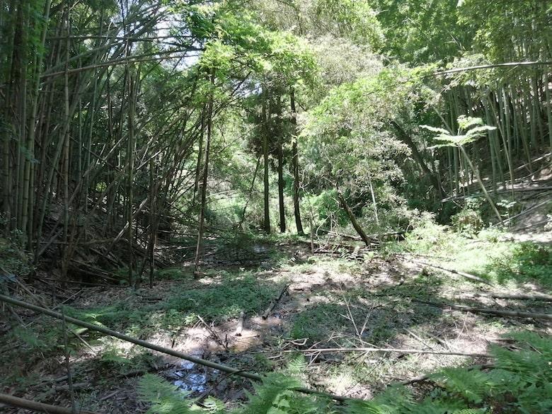 日当たりも良好。竹を伐採して整理すれば更に良くなるはず。
