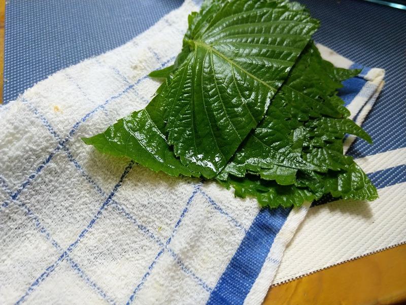 エゴマの葉を洗浄してふきんで水気をとる